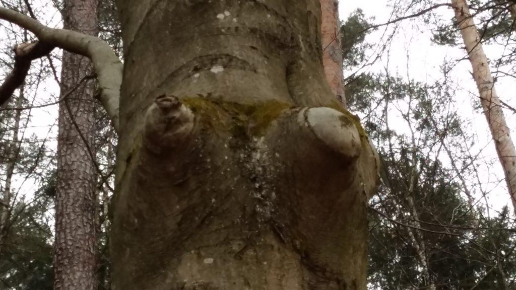 Baum im Püttlachtal